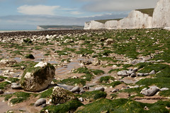 Chalk and seaweed | Birling Gap | Seven Sisters walk | July 2016-14 (Paul Dykes) Tags: southdowns southdownsway southcoast coast cliffs sea shore coastal englishchannel sussex england uk seaside sun sunnyday chalk downs hills countryside