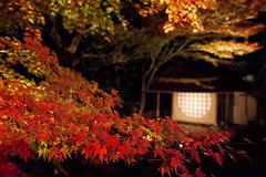 Kodai-ji Autumn 7610 (kbaranowski) Tags: 2016krzysztofbaranowski krzysztofbaranowski nihon nippon autumn maple japanesemaple fallfoliage colorful nature beautyinnature garden japanesegarden reflection kyoto tea house night