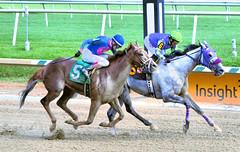 2016-08-13 (1) r5 Yomar Ortiz won on #6 Two Punch Too on the inside (JLeeFleenor) Tags: photos photography md maryland marylandhorseracing marylandracing laurelpark hot jockey   jinete  dokej jocheu  jquei okej kilparatsastaja rennreiter fantino    jokey ngi horses thoroughbreds equine equestrian cheval cavalo cavallo cavall caballo pferd paard perd hevonen hest hestur cal kon konj beygir capall ceffyl cuddy yarraman faras alogo soos kuda uma pfeerd koin    hst     ko  outside outdoors