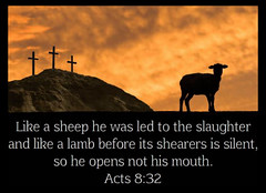 Acts 8:32 (joshtinpowers) Tags: acts bible scripture