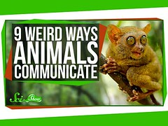 9 Weird Ways Animals Communicate (Download Youtube Videos Online) Tags: 9 weird ways animals communicate