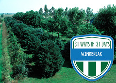 Windbreak (IowaNRCS) Tags: laurasg4projects cd13 macintoshhd nrcsia99487tif photocatalog catalog g4 hd lauras macintosh photo projects nrcsia990487tif 487 trees windbreaks iowa