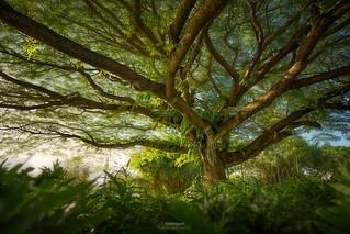 'Far Reaching' - Hilo, Hawaii