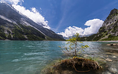 Drift wood (pascal_kipf) Tags: oeschinensee kandersteg switzerland schweiz bergsee lake mountain alps alpen horizont trkis turquoise tanne drift canon 10 18 stm weitwinkel ultraweitwinkel uww wideangle