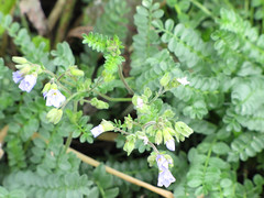 CopperRiver07 (alicia.garbelman) Tags: alaska copperriver wildflowers