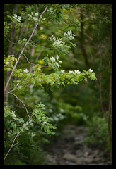 _MG_9934_s (dxyShen) Tags: toronto landscape canon 5dmkii 200mm f2 nikon trees forest bokeh