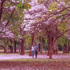 Namorando em meio  Natureza (Serlunar (tks for 5.0 million views)) Tags: namorando em meio  natureza nature serlunar ibirapuera foto