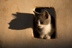 Kitty cats (ramosblancor) Tags: humanos humans naturaleza nature animales animals macotas pets gatos gatitos cats kitten atardecer sunset sombra shadow gracioso funny rethymno creta crete grecia greece