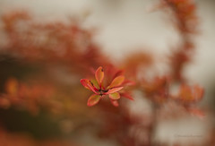 autumn colors (moniverse) Tags: 50mmf14 50mm october fall autumn season dof nature trees leaf leaves branches bokeh light morning golden orange red outdoor canon7d depthoffield