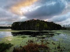 Middle marsh mystery island (Ed Rosack) Tags: orlandowetlandspark cypress usa orlando landscape tree centralflorida cloud water island sky edrosack lake dawn swamp florida cloudy marsh edrosack