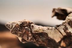 Driftwood 2 (AngharadW) Tags: cymru wales seashore brown wood driftwood