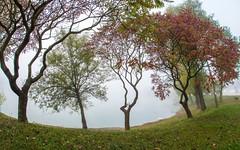 lake Zajarki (070) - misty morning (Vlado Ferenčić) Tags: lakes foggymorning mistyday mistymorning lakezajarki zajarki fog foggy zaprešić hrvatska croatia nikond600 sigma1528fisheye trees fisheye