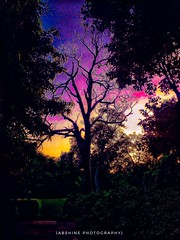 IMAGE SHOT OF COLOURFUL SKY AT PICNIC HUT PARK , DELHI   Facebook:- https://www.facebook.com/Abshinephotography/  #abshine shot this image of a colourful sky at picnic hut park ,delhi. Please share your comments and feedback  EXIF Details :- Mobile photog (abhishekmesthai) Tags: tourandtravel natural picoftheday colourful mobile enjoy recent4recent delhi photography 2016 sky abshinelove abshine pic walking park natur picnic hot india abshinephotography