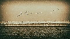 Over the breakwater (Paweł Szczepański) Tags: gdynia pomorskie poland pl legacy trolled sonyflickraward shockofthenew sal70200g