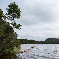 Reach For The Light (greenschist) Tags: water newmansound newfoundland canada terranovanationalpark tress