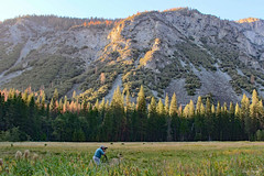 Yosemite Meadow. (Wonder Woman ! Off for 1 month !) Tags: meadow yosemitenationalpark anseladams quote ngc