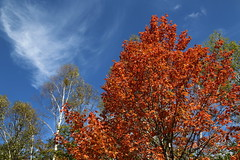 Autumn sky (Teruhide Tomori) Tags: landscape kayede maple red tree nagano japan field nature highland          autumn  norikura mountainside