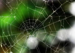 Macro Mondays - Backlit (zendt66) Tags: zendt66 zendt nikon d7200 macromondays macro monday mondays 60mm nikkor hdr photomatix spider web backlit