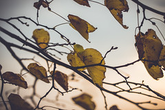 End of life (Tiph Haine) Tags: color macro nature canon french is natural 100mm l usm fullframe paysage franais 6d 100mmmacro llens 2436 primelenses sriel canon6d canonfrance pleinformat macroisusm