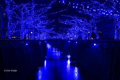 ブルー Blue Light