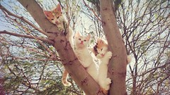 Tarde de juegos (regi_medina) Tags: cats nature kitty gato rbol gatitos