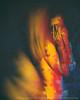 Don't Blink (LukeOlsen) Tags: usa angel oregon portland enigma puzzle dontblink weepingangel lukeolsen