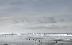 The Sea (Pieter Musterd) Tags: sea holland strand canon nederland thenetherlands zee denhaag nl paysbas thehague branding niederlande zuidholland kijkduin zeemeeuwen musterd pietermusterd sgravenhage haagspraak pmusterdziggonl