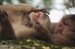 Amor o dolor? (Lquintana Foto) Tags: nature fauna monkey ecuador nikon natural tena monos nkkor misahuall tumblr nikontop lquintana lquintanafoto