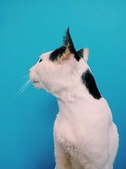 Sr Gato (santicord) Tags: cute cat feline purr meow purrfect
