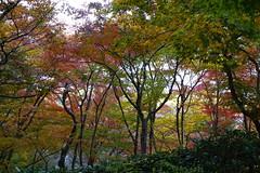 (ddsnet) Tags: travel plant japan sony cybershot autumnleaves  nippon   autumnal nihon  backpackers       rx10 kyotofu