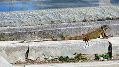 Key West (Florida) Trip, November 2014 2998Ri 9x16 (edgarandron - Busy!) Tags: cemeteries cemetery grave keys florida graves keywest floridakeys keywestcemetery