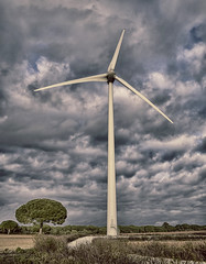 Renewable Energy (asidonian) Tags: sky panorama white plant planta tower mill industry blanco nature ecology windmill electric landscape outdoors atardecer construction nikon energy industrial torre technology power wind object wing meadow machine environmental engineering viento clean equipment molino generator cielo nubes cadiz electricity environment rotation blade electricidad innovation electrical construccin propeller ecologa protection generation turbine alternative limpio renewable ecological windpower rotate tecnologa turbina elctrico hlice proteccin alternativa ecolgico energa elica renovable rotar cuchilla rotacin d5300