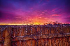 Threads of the Day (Kansas Poetry (Patrick)) Tags: sunrise kansas hdr lawrencekansas oilpaintfilter patrickemerson