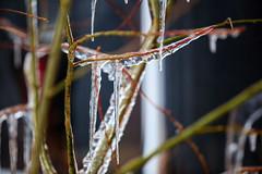 SchnauZe voll (Drachenfanger) Tags: vortex cold macro ice nature virginia unitedstates extreme natur s makro virginiabeach winterstorm 2015 kunstwelt photosophie drachenfanger