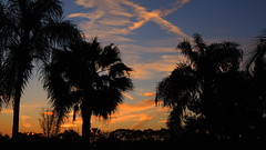 President's Day Sunrise (Jim Mullhaupt) Tags: morning pink blue red wallpaper sky orange sun color tree weather silhouette yellow clouds sunrise landscape dawn nikon flickr florida palm tropical coolpix contrails bradenton sunup jettrails presidentsday p510 mullhaupt jimmullhaupt