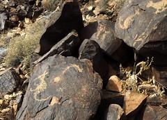 Los Lunas, Hill (glyphwalker) Tags: newmexico rockart petroglyphs loslunashill