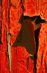 Red Peeling Paint, Birmingham, AL (Thomas Barber Photographs) Tags: red abstract peeling paint