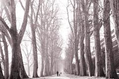 Avenue (SK-Photography.com) Tags: white black 50mm nikon f18 avenue toned d600 explored