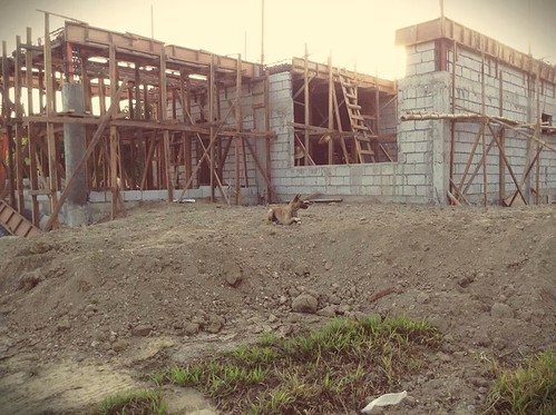 The house I'm building