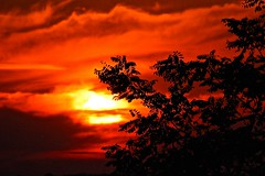 Sunset, clouds & silhouettes (fxdx) Tags: sunset red sun tree nature clouds silhouettes