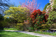 In the Woodland Area (Jocey K) Tags: flowers trees newzealand christchurch sky spring shadows blossom lawn rhododendron azalea ilamgardens
