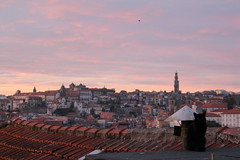 Vista boa e gata preta (Kristin_Grace) Tags: black cat gata preta rooftop dusk sunset por do sol porto portugal europe pink sky clerigos tower