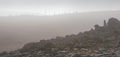 Sanetti plateau, Bale Mountains, Ethiopia