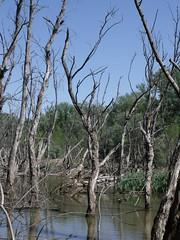 Tisza Backwater of Mrtly, Hungary (Norbert Bnhidi) Tags: hungary mrtly lake ungarn hungra hongrie ungheria hungria hongarije  magyarorszg