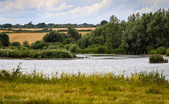 Titchmarsh Nature Reserve (norm.edwards) Tags: lake nature walk summer 2016 titchmarsh thrapston northamptonshire lovely weather sun hot july