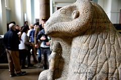 Ram Sphinx of King Taharqo (Sumer and Akkad!) Tags: ramesses amenhotep abydos karnak thebes egypt statue pharaoh cobra vulture osiris isis sphinx ram falsedoor stele cat britishmuseum british museum bloomsbury london hathor luxor philae ptolemaicperiod middlekingdom newkingdom lateperiod ahmose thutmose giza saqqara memphis