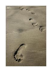 Playeando... (ngel mateo) Tags: ngelmartnmateo ngelmateo playadelmnsul sanjos cabodegata njar almera andaluca espaa playa arena pisadas dorado huella pies mojado textura spain andalusia golden sand beach footprint footprints feet wet texture