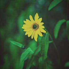 2016-07-28_21-01-34 (torstenbehrens) Tags: flower nature bokeh olympus ep5 m45mm f18 digital camera