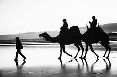 Essaouira's beach at sunset (krllx) Tags: africa marokko essaouira city menneske morocco people street streetphotography streetphoto dsc03902edit201603071 beach coast water reflection monochrome bw blackandwhite nikc camels sunset sundown light atmosphere