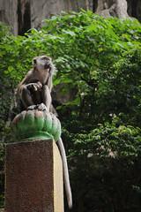 IMG_1199 (oowhatsthatdoo) Tags: kualalumpur kl monkey temple steps eating nature